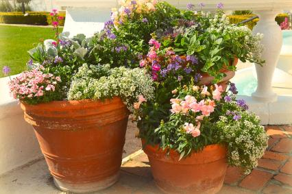 potted-flowers-linda-covino